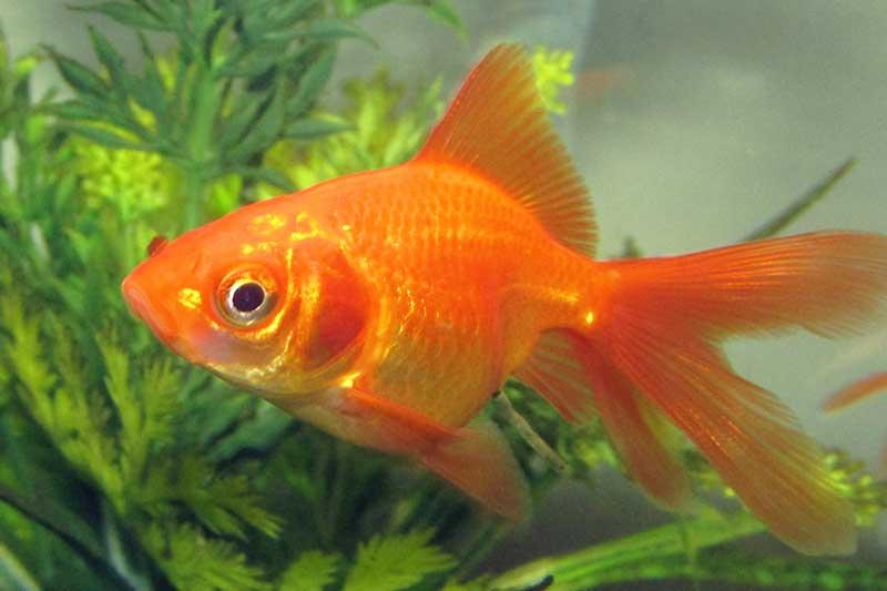 new-fish-to-tank-blog